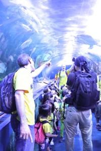 2017 遠足 しながわ水族館 お魚のトンネル