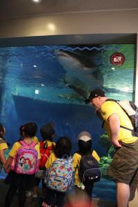 英語保育園幼稚園 遠足 しながわ水族館 サメ