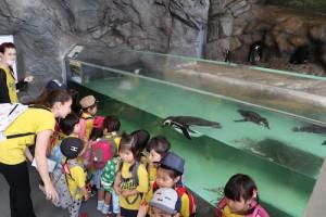 英語保育園幼稚園 遠足 しながわ水族館 ペンギン